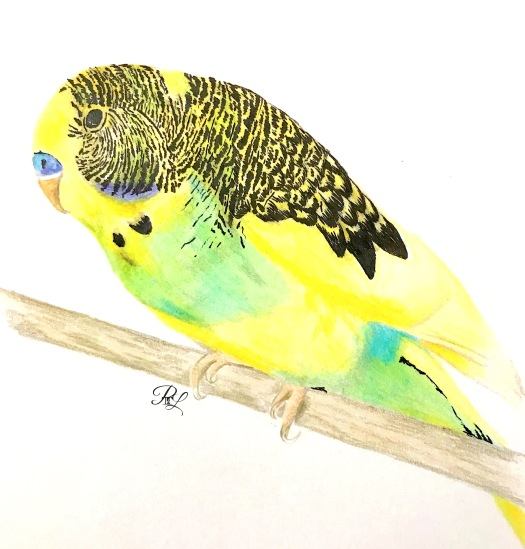 Budgie with Logo