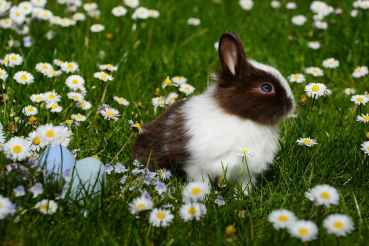 animal bright bunny chamomile